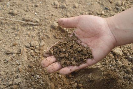 他の肥料と比較したアミノ酸肥料の特徴やメリットを解説!