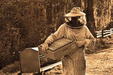 蜂の子サプリメントの選び方とは?
