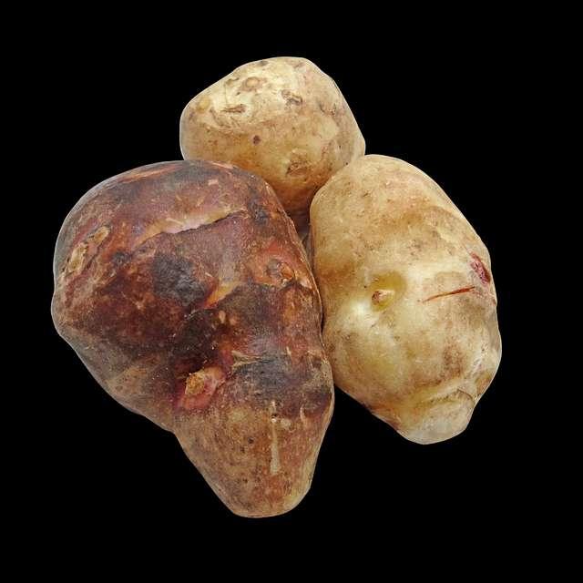 菊芋の成分の効果を解説!ダイエットに良い?